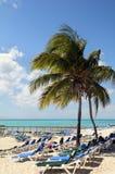 Playa en las Bahamas con el árbol de coco Imagen de archivo