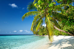 Playa en los Maldivas Imágenes de archivo libres de regalías