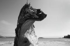 Playa en Rim National Park pacífico Vancouver canadá Fotos de archivo libres de regalías