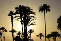 Playa en Tenerife, canario, España, Europa Imagenes de archivo