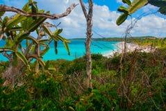 Playa Esmeralda, Holguin, Cuba. Beautiful beach bay turquoise sea water and cactus. Beautiful scenery royalty free stock image