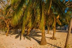 Playa Esmeralda, Holguin, Cuba. Palm trees grow in the sand on the beach. Playa Esmeralda, Holguin, Cuba. Palm trees grow in the sand on the beach, sunny royalty free stock photography