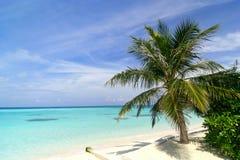 Playa exótica en Maldives Fotografía de archivo