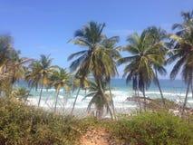 Playa guacuco Royaltyfri Bild