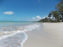 Playa hermosa con el cielo limpio y algunos árboles fotografía de archivo libre de regalías
