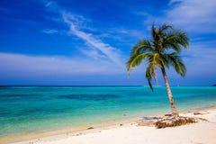 Playa hermosa con la palma con el cielo azul Foto de archivo