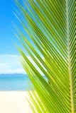 Playa hermosa con la palmera sobre la arena Fotos de archivo