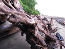 playa hermosa costa rica Zdjęcia Stock