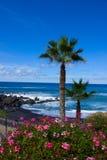 Playa Jardin, Tenerife, Spanien arkivfoton