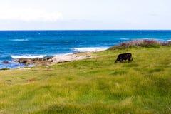 Playa Jibacoa, północny wybrzeże Kuba fotografia royalty free
