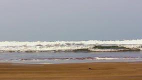 Playa - la India almacen de video