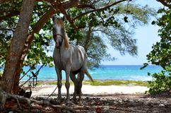 Playa Larga, Κούβα Στοκ Εικόνες