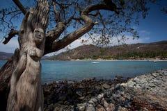 Playa las Gatas Στοκ εικόνες με δικαίωμα ελεύθερης χρήσης