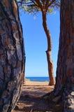 Playa lejana detrás de los árboles Fotos de archivo libres de regalías