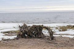 Playa nevada en el golfo de Finlandia cerca de St Petersburg Imagenes de archivo