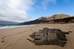 Playa pacífica Fotos de archivo libres de regalías