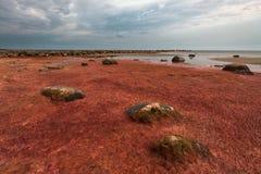 Playa pedregosa Imágenes de archivo libres de regalías