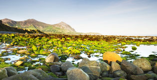 Playa pedregosa después de la salida del sol Fotografía de archivo libre de regalías