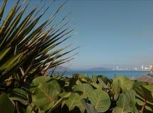 Playa plantas arena Fotografia Stock