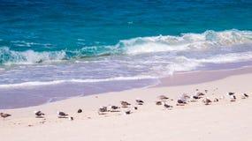 Playa por completo de gaviotas y de ondas que se estrellan agradables foto de archivo libre de regalías
