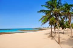 阿雷西费兰萨罗特岛Playa Reducto海滩棕榈树 免版税图库摄影