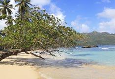 Playa Rincon, έλξη παραλιών στη Δομινικανή Δημοκρατία Στοκ φωτογραφίες με δικαίωμα ελεύθερης χρήσης