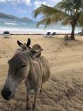 Playa Rincon stockfoto
