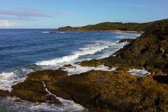 Playa rugosa con las rocas y los árboles en el puerto Macquarie Australia Foto de archivo libre de regalías
