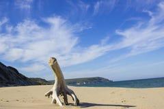 Playa salvaje en el Mar Negro Imágenes de archivo libres de regalías