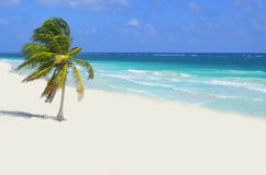 Playa salvaje en Tulum fotografía de archivo libre de regalías