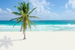 Playa salvaje en Tulum Imágenes de archivo libres de regalías