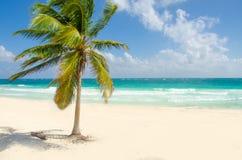 Playa salvaje en Tulum Foto de archivo libre de regalías