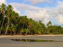 Playa salvaje tropical   foto de archivo libre de regalías