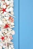 Playa Shell Beauty Fotos de archivo libres de regalías