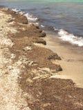Playa sucia fotografía de archivo libre de regalías