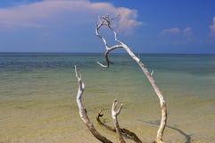 Playa tranquila con el árbol Imagen de archivo libre de regalías