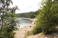 Playa a través de los árboles de abedul Fotografía de archivo