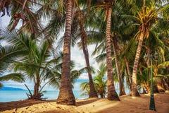 Playa tropical bajo el cielo melancólico Imagen de archivo libre de regalías