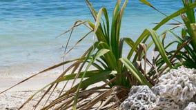 Playa tropical con el coral y la planta almacen de video