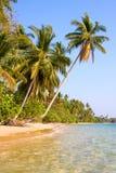 Playa tropical con la palma de coco Fotos de archivo libres de regalías