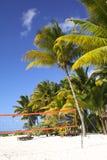 Playa tropical con la red del voleibol debajo de las palmeras Imágenes de archivo libres de regalías