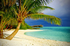 Playa tropical con las palmas Imagenes de archivo