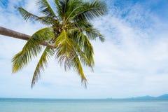 Playa tropical con las palmeras del coco KOH Samui, Tailandia fotografía de archivo