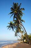 Playa tropical con los árboles de coco Imágenes de archivo libres de regalías