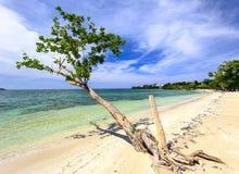 Playa tropical de la arena con el árbol en el Caribe Fotos de archivo