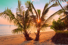 Playa tropical de la puesta del sol Tailandia, Koh Samui Fotografía de archivo