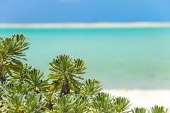 Playa tropical en de Cayo la isla largo imagen de archivo libre de regalías
