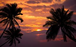 Playa tropical en puesta del sol con las palmeras de la silueta Imagenes de archivo