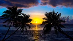 Playa tropical en puesta del sol con las palmeras de la silueta Fotografía de archivo libre de regalías