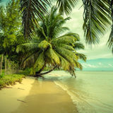 Playa tropical, estilo del vintage Foto de archivo